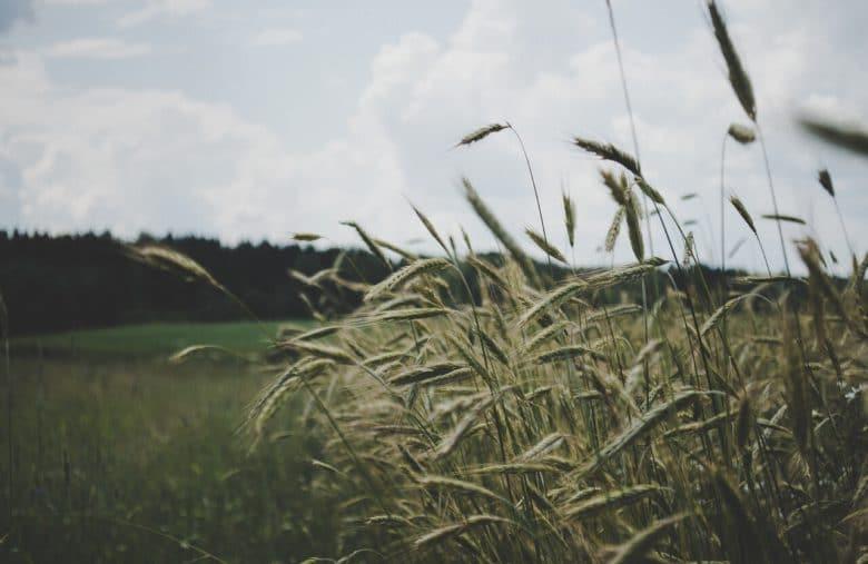 農業數位平台